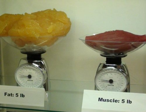 Why do you need to differentiate between muscle and fat?